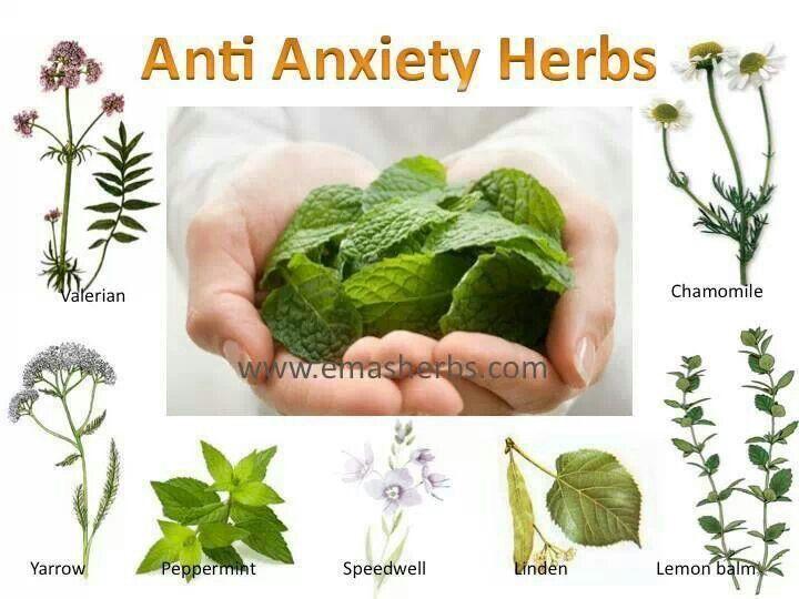 Anti anxiety herbs