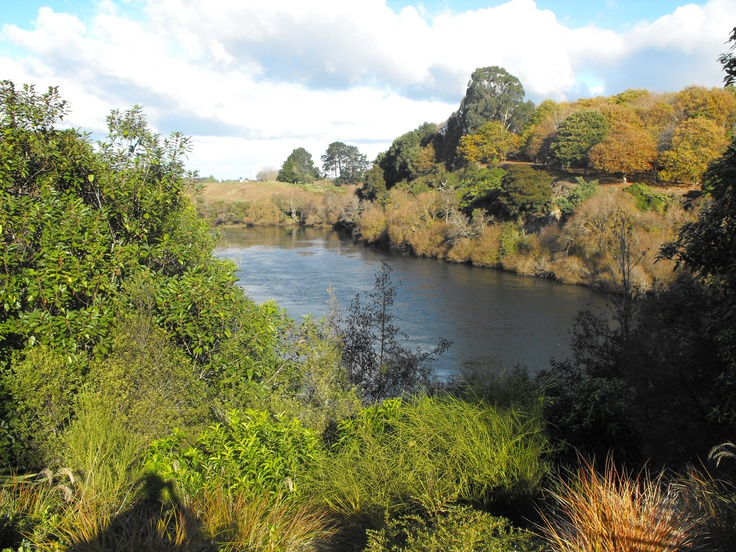 A Beautiful day on the Waikato river, NZ