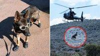 La Stampa: cani paracadutisti per salvare gli elefanti africani dal bracconaggio.
