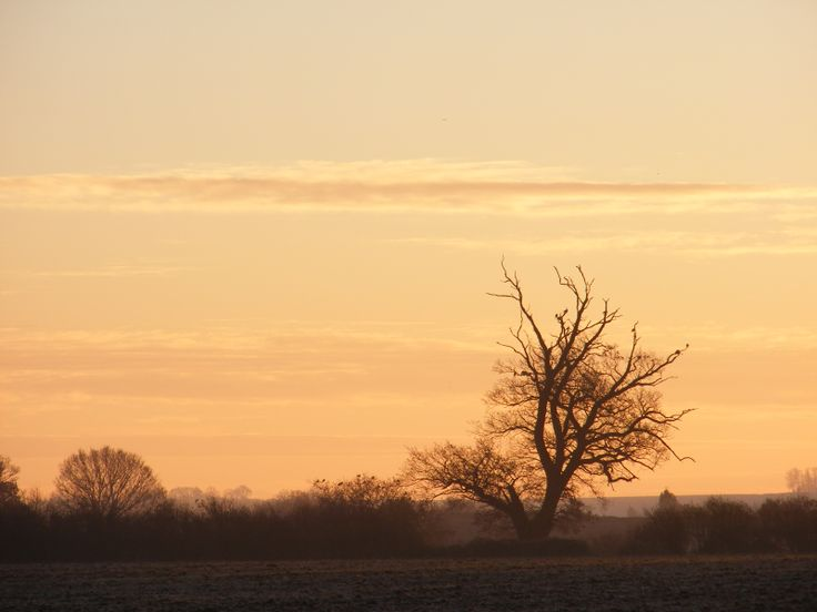 December dawn landscape with trees