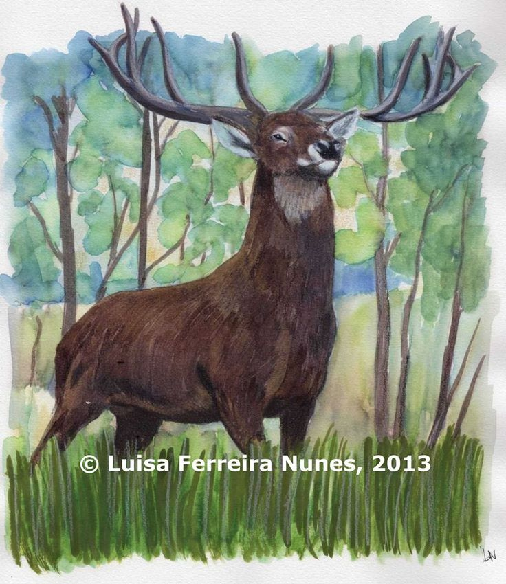 VEADO - No próximo Diário da Natureza 2014, de Luísa Ferreira Nunes, a ser lançado pela 'Planeta Vivo', em finais do próximo mês de Outubro.