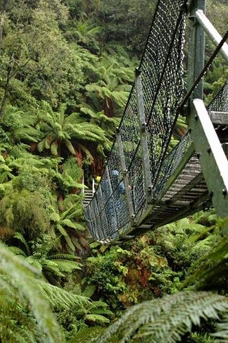 Suspension Bridge by Montezuma Falls - Tasmania, Australia