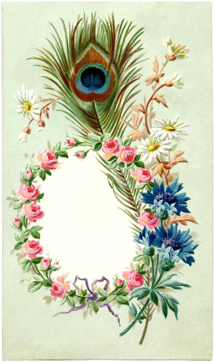 Vintage Peacock Feather Frame Image - Graphics Fairy
