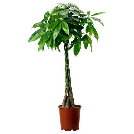 Die besten 25 pflegeleichte zimmerpflanzen ideen auf for Stylische zimmerpflanzen