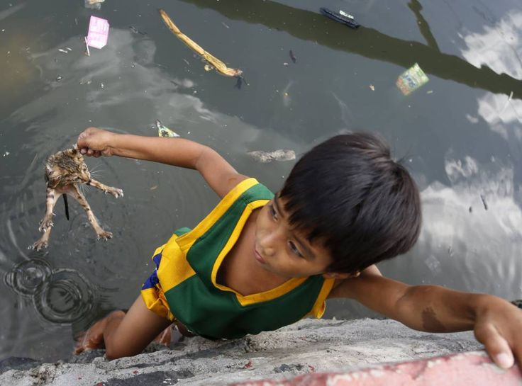 JoanMira - 1 - World : Imagenes del Mundo - El niño y el gato - Manila (F...