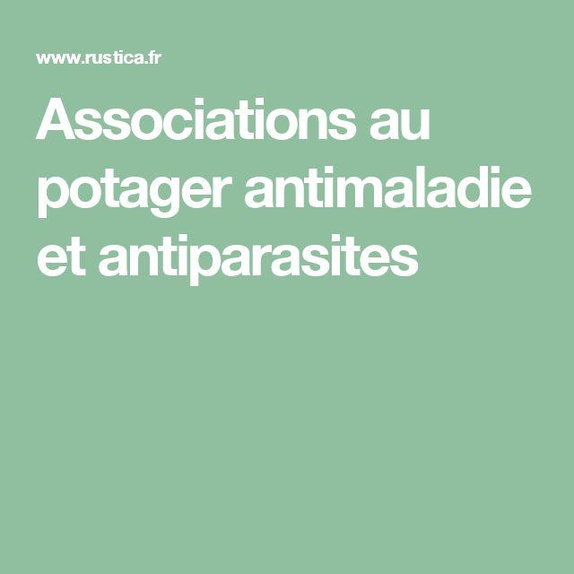 Associations au potager antimaladie et antiparasites