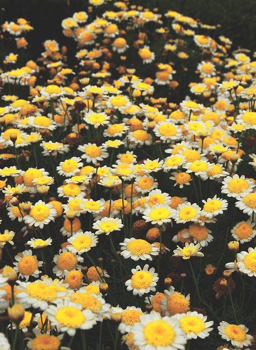 Um jardim com flores comuns  tão lindas que enfeitam até casas de Querubins. . . __Sol Holme__