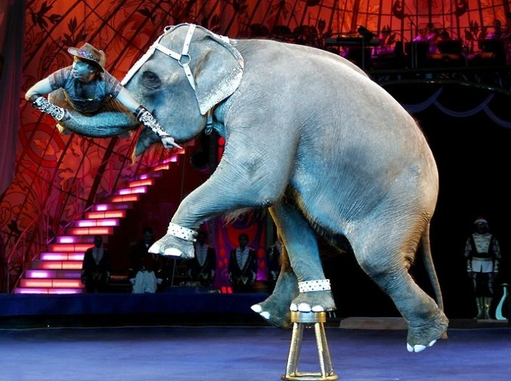The Big Animals in Sokolniki #animals #circus #elephant #moscow #russia #stage #artists