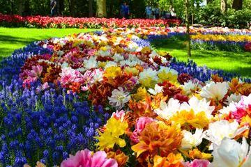 Skip the Line: Keukenhof Gardens Tour and Tulip Farm Visit from Amsterdam (with Photos) | Amsterdam, North Holland Province - TripAdvisor