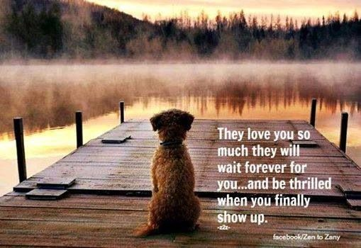 They love you so much they will wait forever for you, and be thrilled when you finally show up. #dogs