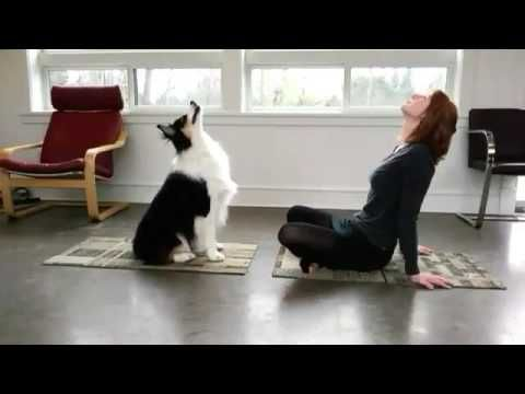 Dog Is Doing Yoga With His Owner  Watch This