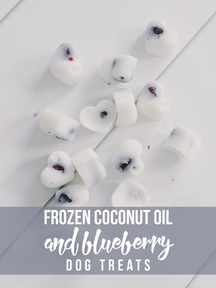 These Frozen Coconut Oil and Blueberry Dog Treats are a fresh way for your pup to cool off this Summer! Bonus: they are super healthy for them, too!
