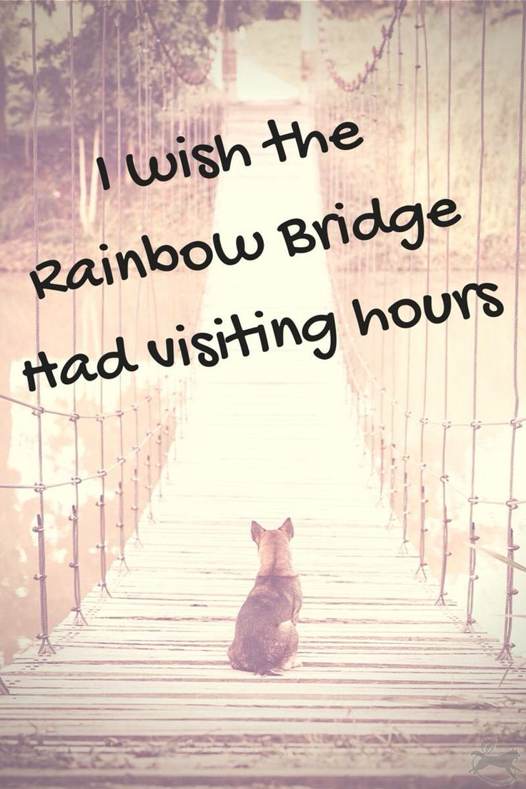 To Shoshone and Jordan and all the other Precious Little Dogs I have had.... I Miss You !!!