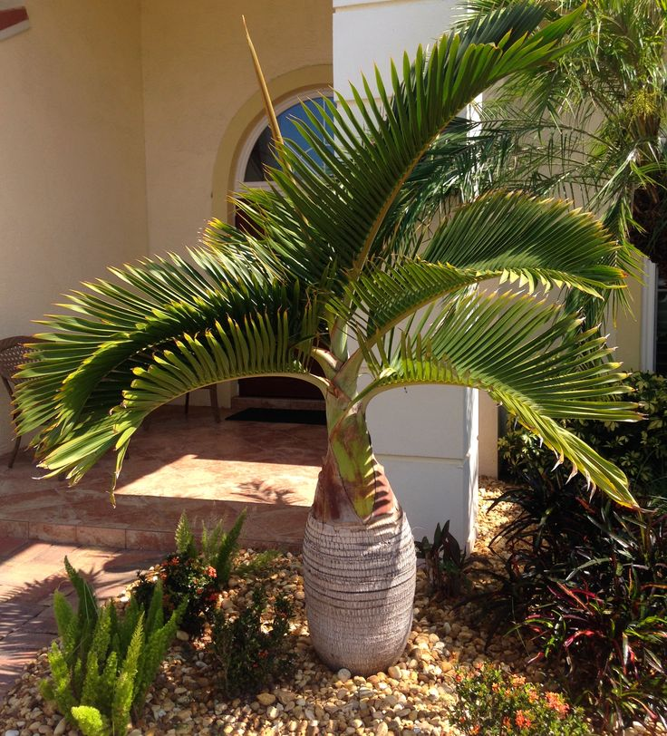 Tropical Home Garden Design Ideas: 113 Best Trees Images On Pinterest