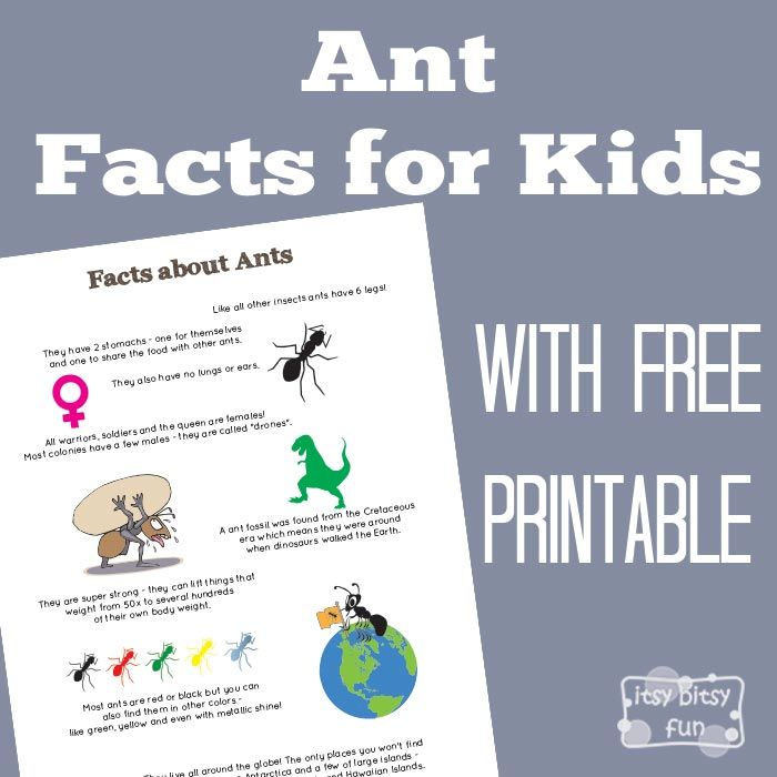 fun facts about ants for preschoolers 24 best facts for images on facts 219
