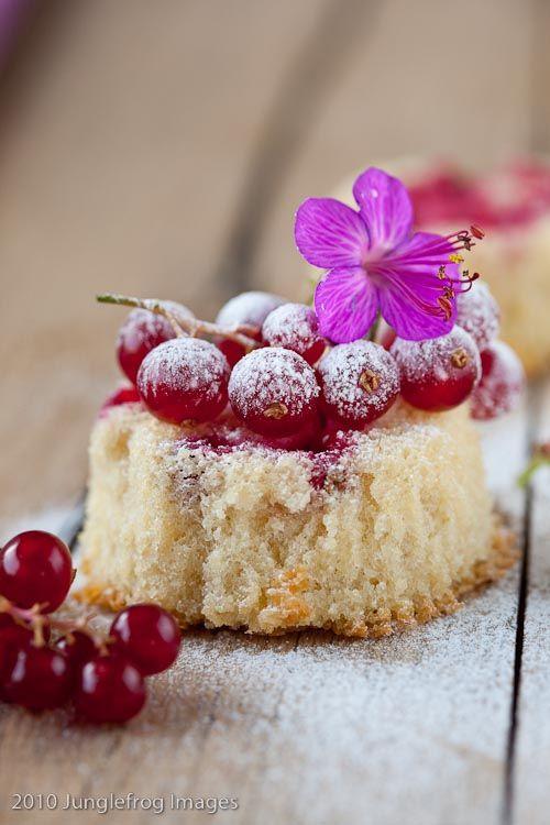Mini Currant Cake