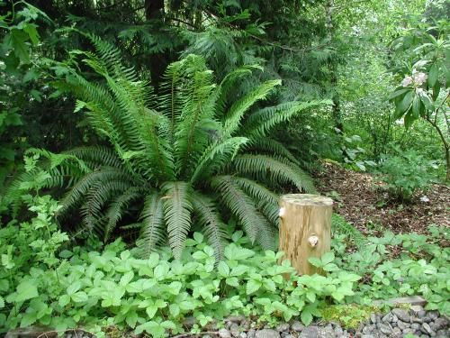 Landscaping with pacific northwest native plants fact for Garden plant information