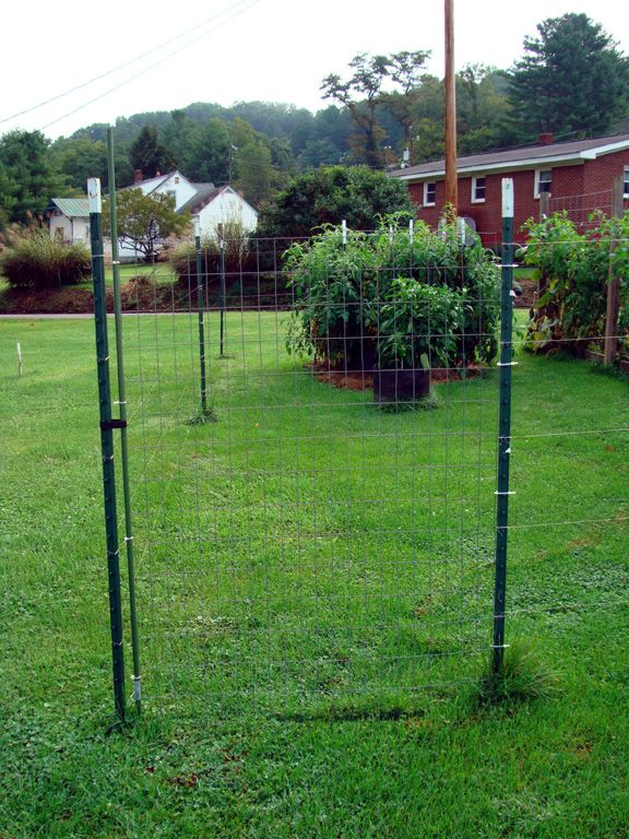 The gate consists of a small piece of welded wire fabric. It is attached to one of the t-posts with cable ties. The other side is attached to a garden stake which is held closed with a piece of velcro