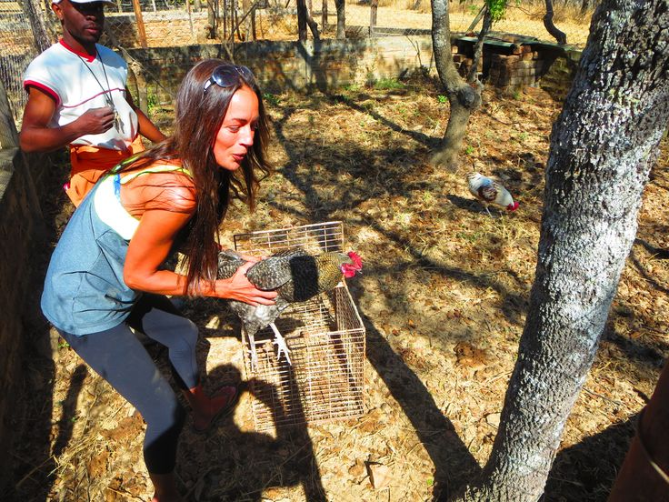 I had to rescue some chickens and roosters, I just couldn't help myself!