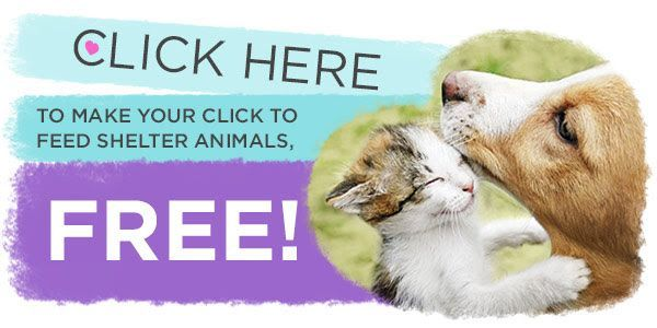 Animal Shops From Leatherwood Design Animal Shelter Animals Animal Rescue Site