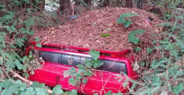 Under the Pines: 1988 Pontiac Trans Am GTA #USA #American, #Pontiac, #Projects - https://barnfinds.com/pines-1988-pontiac-trans-gta/