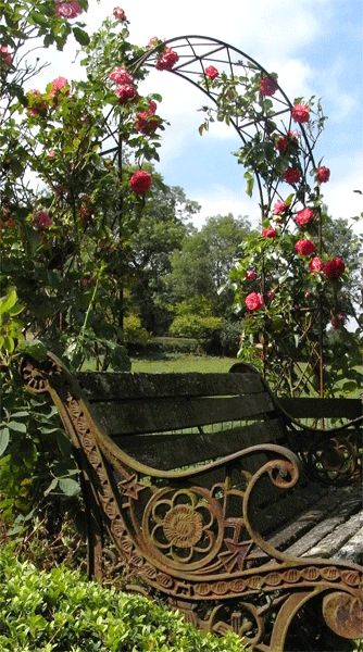 Rose arbor & vintage bench.