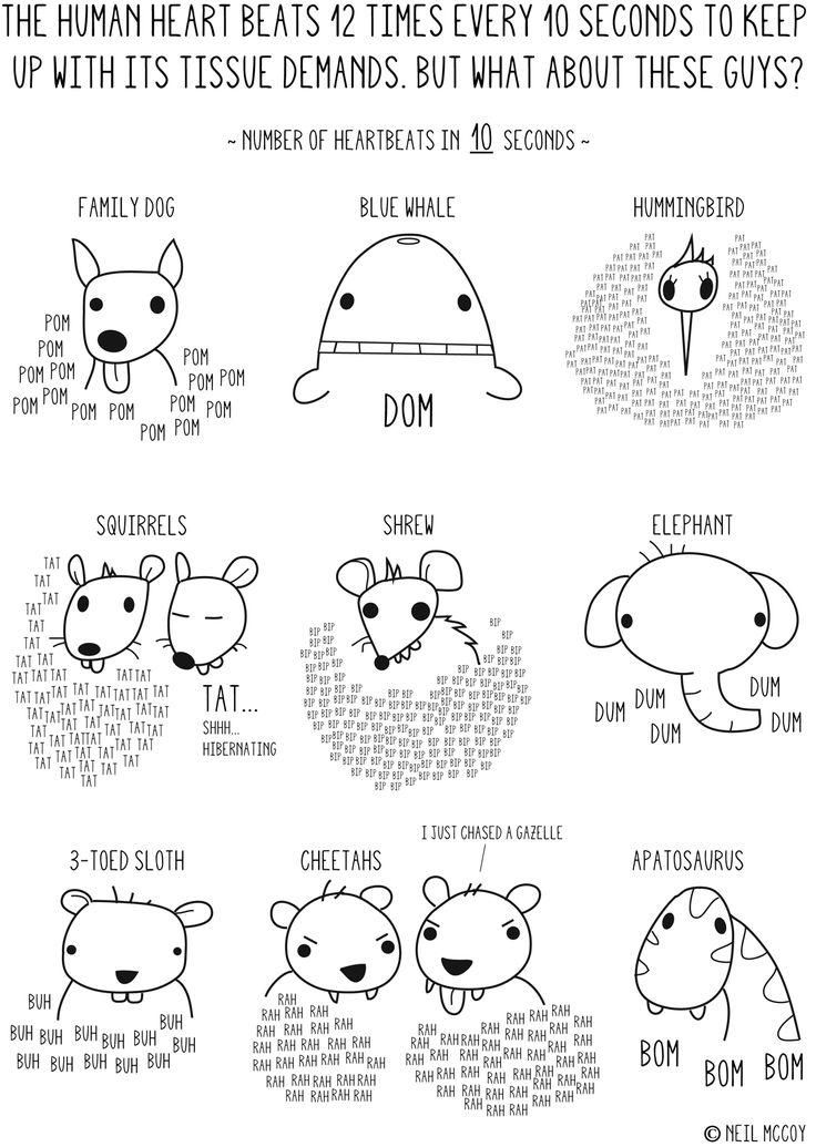 lifespan of different animals pdf