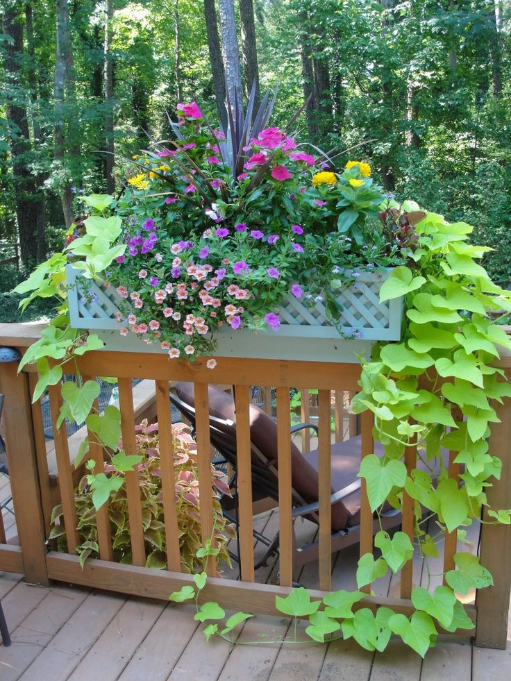 Window Box Contest Entry Billowing summer color