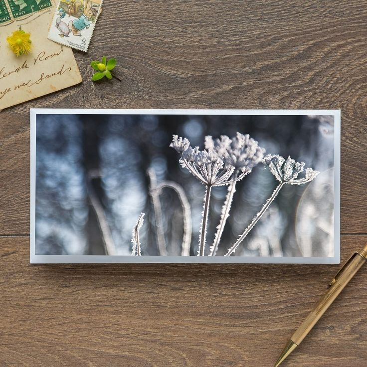 Single Blank Card by landscape photographer Nina K Claridge – Frozen Seed Head