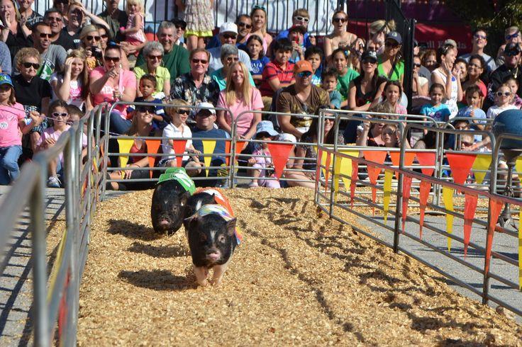 Last year, the South Florida Fair took visitors to Las Vegas.