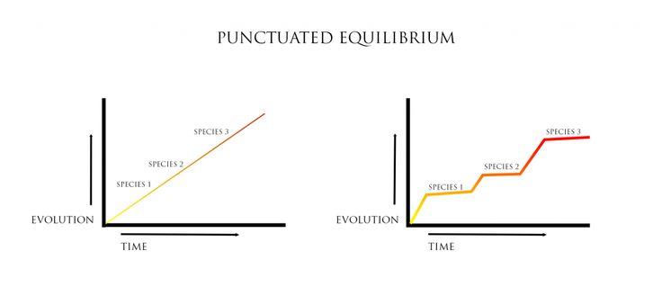 Image result for punctuated equilibrium