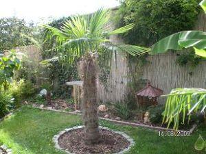 winterharte palmen in rüdersdorf b.berlin - home winterharte, Gartenarbeit ideen