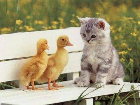 Ms de 25 ideas increbles sobre Fotos de gatitos tiernos en