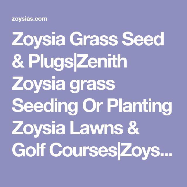 Zoysia Grass Seed & Plugs|Zenith Zoysia grass Seeding Or Planting Zoysia Lawns & Golf Courses|Zoysias.com