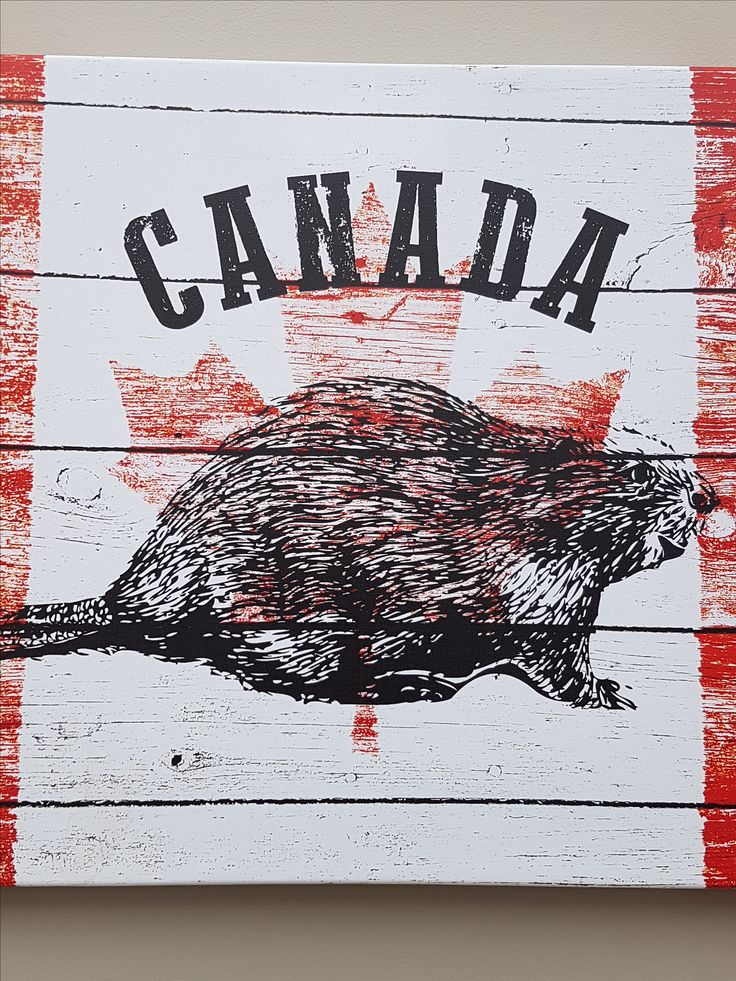 Canada beaver printed picture