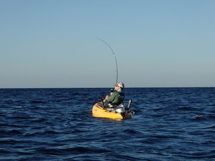 7 best gulf fish images on pinterest pisces fishing for Florida gulf coast fishing