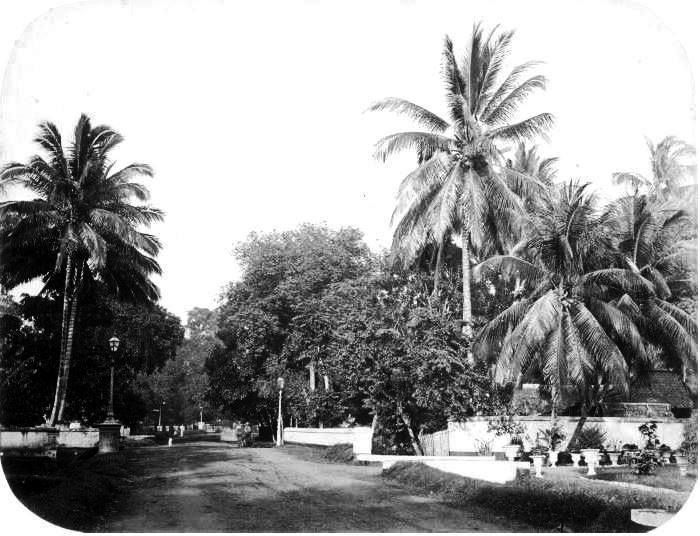 This is gang (small street) of Scott - don't understand why it is called in a western name (photo taken in 1875)- currently it is called Budi Kemuliaan in central Jakarta. It looks the same except those big coconut trees are not exist replaced by buildings. There was once a very famous discotheque where expats and foreigners loved to hang out (1970-1990 something) it was called Tanamur not far from here but it's just a history now.