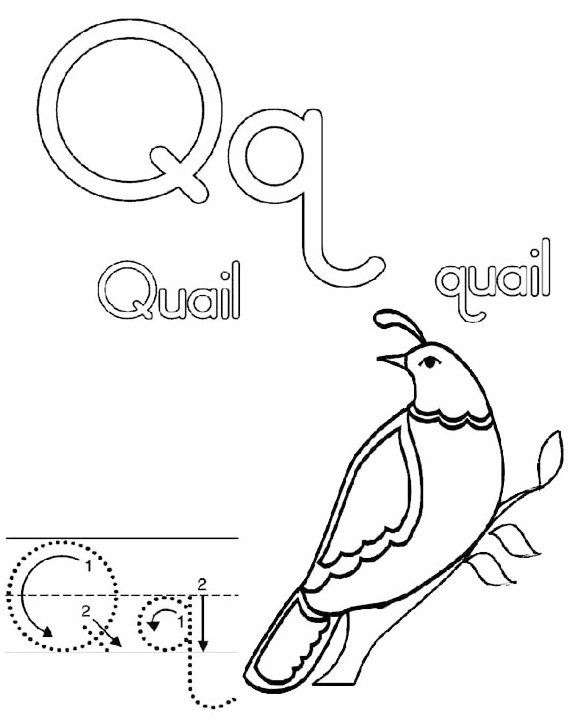 Letter Q For Quail California Coloring Page