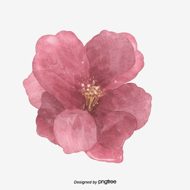Pink Painted Flowers Flowers Plant Watercolor Flowers Png Transparent Image And Clipart For Free Download Flower Painting Hand Painted Flowers Pink Flowers Background