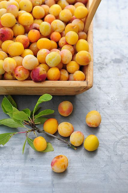 """Mirabelles. My Pepere grew these in the """"jardin"""""""