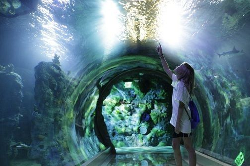 aquarium london - Google Search