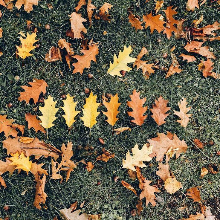 #AutumnColors  . . . . . #flatlaypoland #flatlayforever #flatlay #flatlays #flatlaylove #flatlaysquad #flatlaystyle #flatlaytoday #flatlayoftheday #seasons #searchwandercollect #seeingthepretty #autumnvibes #autumn # #leaf #leafs #tv_living #tv_stilllife