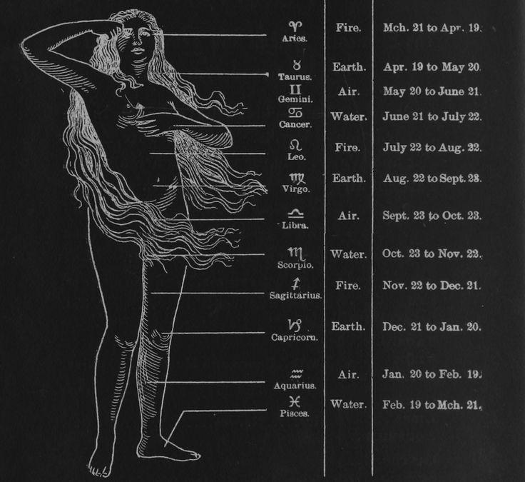 Zodiac Signs Body Related Keywords & Suggestions - Zodiac Signs Body