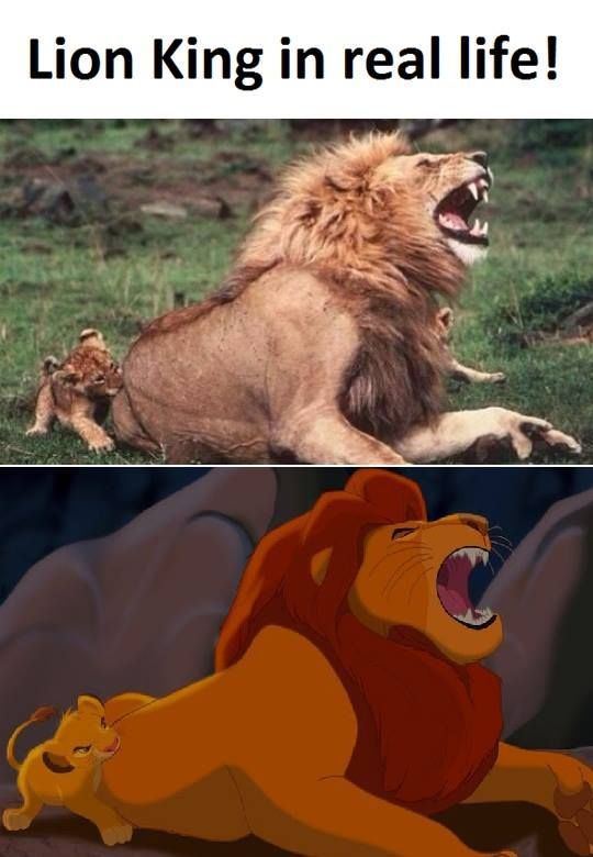 Lion King in real life!