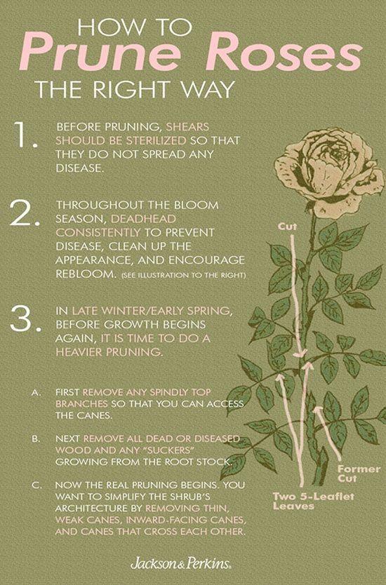 #postris #clever #taking #flower #garden #tips  – roses