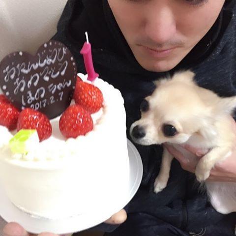 夫がほのちゃんの1歳のお祝いにおもちゃと缶詰めとジャーキーとケーキ🎂を用意してくれてました❤️良かったね〜ほの(o^^o)🐕✨しかしケーキは2人で食しました笑🐕ほのには大好きなささみの缶詰め〜♫元気でずっとずっと一緒にいてねほのちゃん。 #愛犬 #1歳誕生日 #誕生日ケーキ🎂 #お誕生日おめでとう #ロングコートチワワ #チワワ #フォーン #大好き #わんわんわん #ずっと一緒 #ありがとう