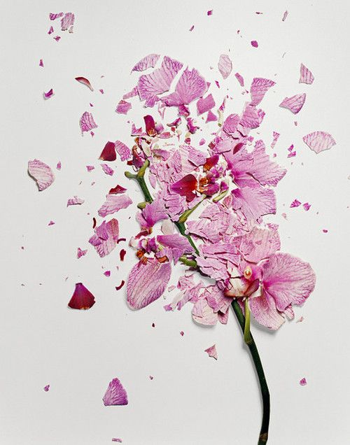 "Photographer Jon Shireman soaked flowers in liquid nitrogen and then shattered them for his 2010 photo series ""Broken Flowers."""