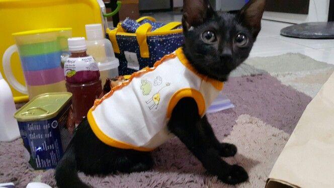 I love black cat
