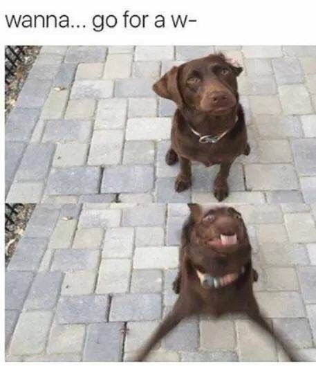 21 memes your dog would definitely laugh at if he could read / laugh … #cute #dogs #fun #funnypictures