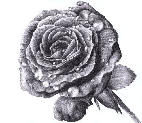 Rose with water drops tattoo design